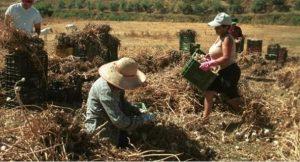 Trabajar en el campo: Una jungla donde se devoran literalmente unos a otros